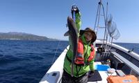 YouTuber Quỳnh Trần JP gây tranh cãi gay gắt khi đăng video đi câu cá mập con để ăn