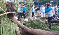 Từ sự cố cây đổ khiến học sinh tử vong, ghi lại ngay các quy tắc an toàn mùa mưa bão!