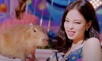 """Loài vật xuất hiện trong MV """"Ice Cream"""" có tên là gì mà được Jennie BLACKPINK """"hôn môi""""?"""