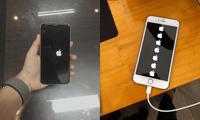Sau khi nâng cấp iPhone của mình lên iOS 14, chàng trai này nhận được hẳn... 7 trái táo