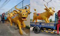 """Biểu cảm siêu hài hước của """"Trâu vàng"""" Tân Sửu ở tỉnh Vĩnh Long: Tôi là ai và đây là đâu?"""
