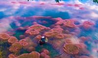 Ngất ngây trước vẻ đẹp của hồ Tảo Hồng ở Lâm Đồng, chụp ảnh ở đây cứ gọi là xuất sắc!