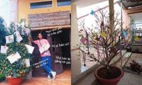 """Trào lưu """"hot"""" của teen Việt trong những ngày Tết: Khoe cây cảnh treo đầy bằng khen, huy chương"""