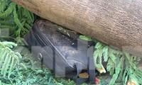 Hiện trường cây phượng cổ thụ trong trường học đổ đè học sinh tử vong