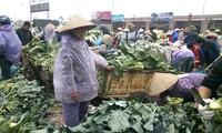 Tiểu thương tại chợ truyền thống hét giá rau xanh vì trời rét ảnh: Ngọc Mai