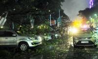 Cây cổ thụ bật gốc trong cơn mưa đè nhiều ô tô.
