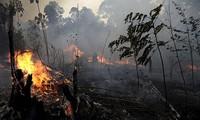 Một vạt rừng bị thiêu rụi ở Amazon. Ảnh: AP
