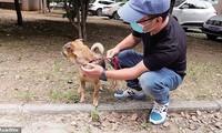 Nhân viên y tế thả Xiao Bao đi xa nhưng chú chó nhỏ vẫn tìm đường quay về bệnh viện tìm chủ.
