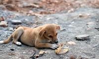 Một chú chó đang ăn chapati - món bánh truyền thống của Ấn Độ. Ảnh: Shutterstock