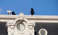 Vệ sĩ tại lễ nhậm chức của ông Joe Biden. Ảnh: Reuters