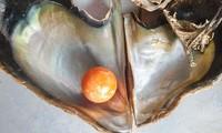 Được 'bụt' báo mộng, ngư dân tìm thấy viên ngọc trai màu cam giá gần 8 tỉ
