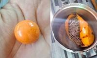 Cắn trúng viên ngọc trai màu cam tiền tỉ khi đang ăn ốc luộc
