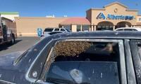 Đàn ong đậu kín băng ghế sau. Ảnh: NYTimes