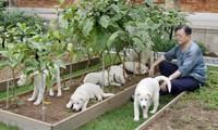 Tổng thống Moon Jae-in chơi đùa cùng những con chó trong Nhà Xanh. Ảnh: EPA
