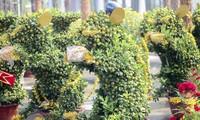 Quất bonsai tạo hình chuột khuấy động chợ hoa Tết.