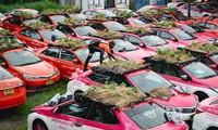 Thái Lan: Hàng trăm chiếc taxi biến thành vườn trồng rau khi phải nằm im giữa mùa dịch