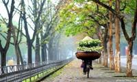 Cuộc thi viết Trà sữa cho tâm hồn: Tháng Tư ngóng chờ mùa hoa bách hợp nở
