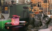 TP.HCM: Những tiệm cà phê vintage chất lừ dành cho hội mê thú cưng