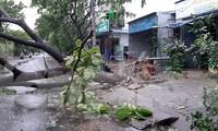 Mưa gió ào ào, cây bật gốc ngổn ngang ở Đà Nẵng