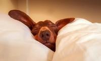 """12 cách để dậy sớm cho """"cú đêm"""" - phao cứu sinh những ngày học online buổi sáng"""
