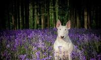 Gặp gỡ Claire - em cún có niềm đam mê chụp ảnh với hoa