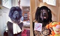 Chó thành người mẫu