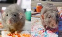 Những họa sĩ chuột nổi tiếng