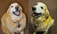 Chó giảm cân