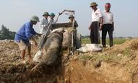 Dịch tả lợn châu Phi đã lan 52 tỉnh thành và tiếp tục khả năng lan ra các địa phương khác