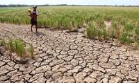 Việc giảm xả nước của đập Cảnh Hồng (Trung Quốc) sẽ ảnh hưởng đến tình hình hạn mặn ở Đồng bằng sông Cửu Long của Việt Nam.