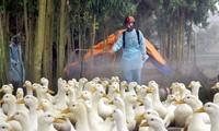 Dịch cúm gia cầm A/H5N6 đã xuất hiện ở 5 tỉnh thành trên cả nước