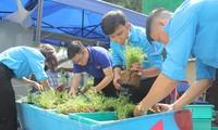 Bạn trẻ tạo mảng xanh mát lành từ công sở đến góc bếp