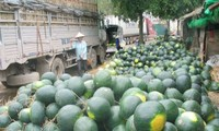 Hiện còn gần 1.000 container nông sản ùn ứ tại cửa khẩu của các tỉnh