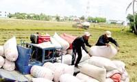 Bộ Công Thương đề nghị Bộ Tài chính chỉ đạo hải quan thống kê các tờ khai có dấu hiệu khai khống xuất khẩu gạo