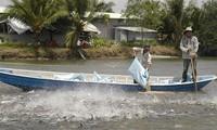 Nuôi cá tra tại Vĩnh Long. ảnh: Cảnh Kỳ