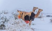 Ngỡ ngàng bộ ảnh tuyết phủ sa mạc Sahara đẹp như mơ