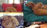 Màn âu yếm tình bể bình của cặp đôi chó mèo khi ba mẹ vắng nhà