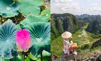Sen nở rộ, lúa trải vàng ở địa điểm check-in hot nhất Ninh Bình, xách ba lô lên và đi thôi!