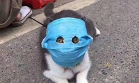 Ảnh chú mèo đeo khẩu trang giữa dịch virus corona gây bão mạng