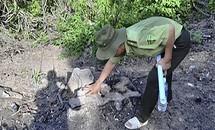 Không kỷ luật kiểm lâm vụ phá rừng ở Bình Định