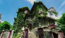 Biệt thự 3 tầng phủ kín cây xanh giữa lòng Hà Nội