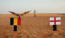 Tranh hạng 3 World Cup: 'Tiên tri' chim cắt dự đoán Bỉ thắng Anh
