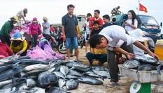 Cận cảnh mẻ cá bè, đỏ củ trị giá hơn nửa tỷ ở cảng Lý Sơn