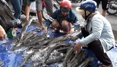 Đổ xô mua cá tầm giá rẻ trên vỉa hè Sài Gòn