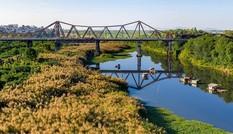Cầu Long Biên đẹp mê hoặc trong mùa cỏ lau