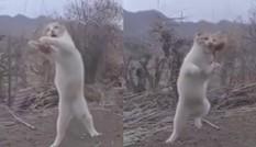 Chú mèo 'xuất chiêu' cực đỉnh, phi người tóm gọn chim đang bay