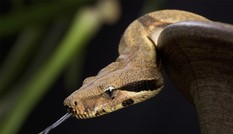 Điều gì xảy ra nếu loài rắn biến mất?