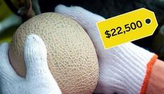 Vì sao dưa lưới Nhật giá hàng chục nghìn USD một trái?