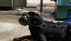 Quân đội Mỹ trang bị kính AR cho… chó