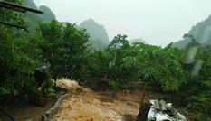 Hái na nguy hiểm trong mưa lũ